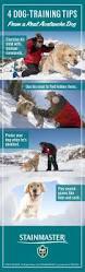 best 25 search and rescue dogs ideas on pinterest search and