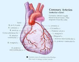 Heart Anatomy Arteries Houston Heart Center Our Services