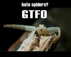Spider Meme - image spider meme jpg the lord of the rings minecraft mod wiki