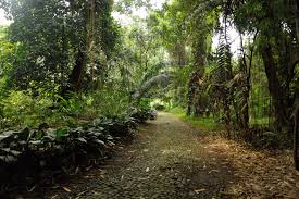 Largest Botanical Garden by Day Trip From Jakarta To Bogor And To Taman Safari Park In Indonesia
