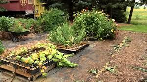 prairie yard u0026 garden straw bale and pallet gardening youtube