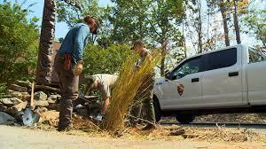 native border plants wbir com pest plants invade smokies wildfire areas