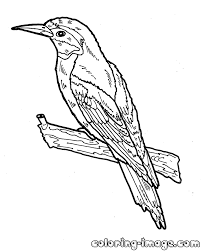 european bee eater free coloring pages for kids