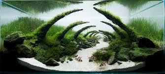 japanese aquascape caj creative aquascape japan aquascape idea pinterest