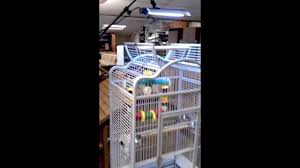 uv light for birds arcadia parrot pro uv flood and adjustable stand youtube