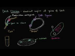 dna cloning and recombinant dna video khan academy
