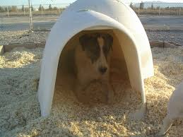 Igloo Dog Houses Zaltana Anatolians