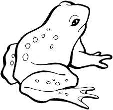 small frog ready hopping coloring pages for kids csy printable