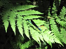 Free Picture Leaf Nature Fern Free Images Tree Nature Forest Branch Leaf Flower Green