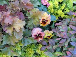 Weather Zones For Gardening - container gardens for chilly weather hgtv