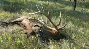 possible new world record elk shot in montana ktvq com q2