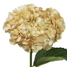 wholesale hydrangeas dusty airbrushed hydrangea flowers collection