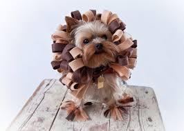 halloween lion costumes dog costume dog halloween costume lion dog costume pet