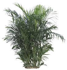 low light plants indoor plants u0026 house plants in boston ma