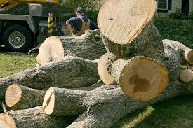 tree service near me b tree and property services