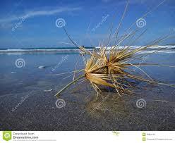 tumbleweed on the beach stock photo image 50904781