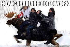 Canadian Meme - canadian moose meme moose best of the funny meme