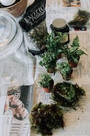 planting a terrarium garden mommycoddle