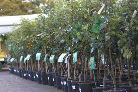 28 tree nursery for sale broadview garden club plant sale