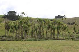 trees for survival pur projetpur projet
