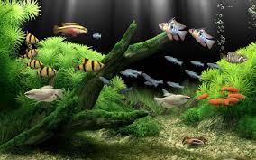 Zombie Aquarium Decorations Marine Aquarium Live Wallpaper 1mobile Com