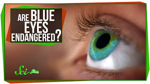 are blue endangered