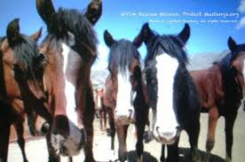 mustang org pm wy14 june 16 2014 b csmalley protect mustangs