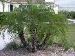 Cateracterum Palm by Design Installation And Maintenance