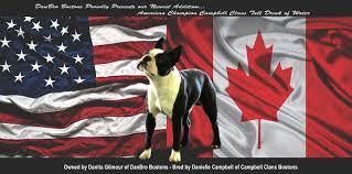 Boston Terrier Flag Danbro U0027s Quench