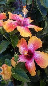 Flowering Shrubs For Partial Sun - flowers u0026 shrubs the green goat