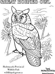120 best printable colouring pages images on pinterest printable