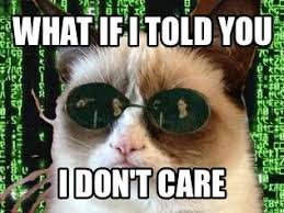 Morpheus Cat Meme - 20 best best of morpheus images on pinterest memes humor meme