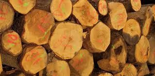 chambre d agriculture 09 chambres d agriculture un nouveau service valorisation du bois