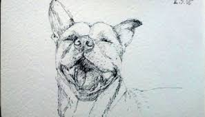 back from the dead a fruit bat dog one drawing daily