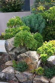 568 best rock garden ideas images on pinterest garden ideas