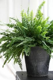 the most popular indoor plants of germany u2013 fresh design pedia