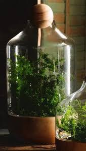 22 best terrariums u0026 planters images on pinterest terrarium