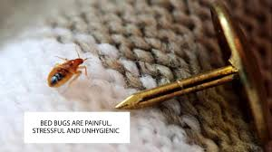 How To Get Rid Of Bed Bugs In Mattress How To Get Rid Of Bed Bugs Uk Bed Bug Control London Catch It