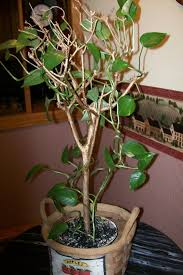 crafts using tree branches thriftyfun