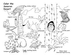 desert owl coloring page desert sonoran simple coloring page