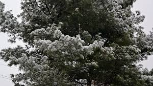 hd wallpapers page 1717 snowy tree blanket branch pine snow