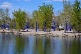 New Mexico beaches images Photos from the blue trees tree new mexico new mexico trees jpg