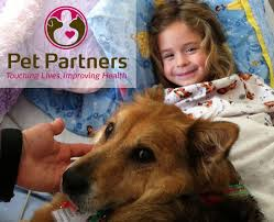 Comfort Dogs Certification 21 Best Canine Caregivers Images On Pinterest Therapy Dogs
