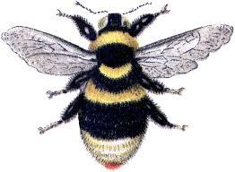 bumble bee clipart bumblebee clipartcow clipartandscrap