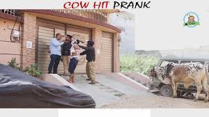 cow diaper prank by nadir ali in p4 pakao 2017 youtube