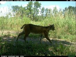 Wisconsin wildlife images Snapshot wisconsin trail cams to document state 39 s wildlife jpg
