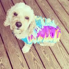 diy dog halloween costume diy dog costumes peeinn com