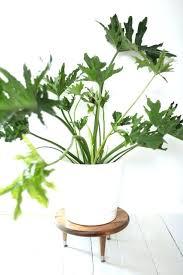 good inside plants good indoor plants receive4 club