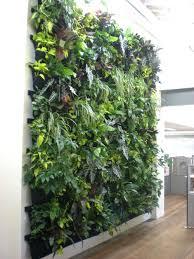 Indoor Hanging Garden Ideas Indoor Wall Gardens Creative Living Wall Indoor Wall Garden Ideas