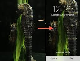 fixing ios 7 wallpaper woes how to scale crop align design why wallpapers auto zoom when cropping